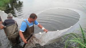 прибиране на рибите