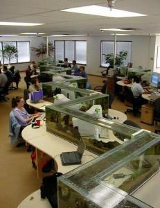 офис аквариум