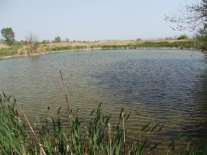 езеро от фермата