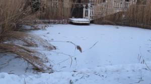 зима в езерото на крокодилите