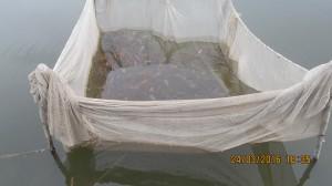садка за съхранение на риба