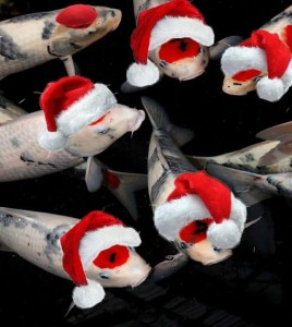 Честито Рождество Христово! Всички божи творения се радват!